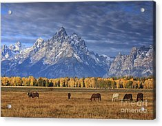 Sunrise Grazing Acrylic Print by Mark Kiver