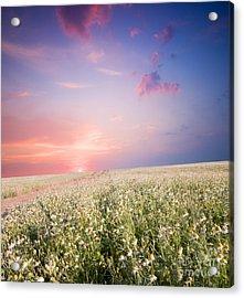 Sunrise Over Flower Land Acrylic Print by Michal Bednarek