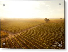 Sunrise Over The Vineyard Acrylic Print by Diane Diederich
