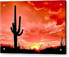 Sunrise Saguaro National Park Acrylic Print by Bob and Nadine Johnston