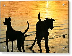 Sunset Dogs  Acrylic Print by Laura Fasulo
