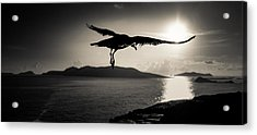 Sunset Flight Acrylic Print by Florian Walsh