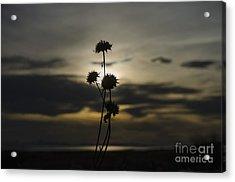 Sunset Flower Acrylic Print by Nicole Markmann Nelson