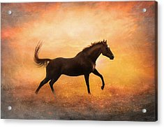 Sunset Gallop Acrylic Print by Pamela Hagedoorn