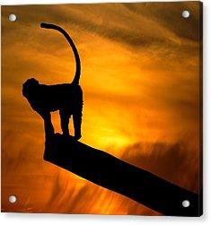 Monkey / Sunset Acrylic Print by Martin Newman