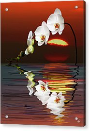 Sunset Orchids Acrylic Print by Angela A Stanton