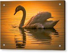 Sunset Swan Acrylic Print by Brian Stevens