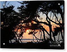 Sunset Through The Cypress Trees Cambria Acrylic Print by Ian Donley
