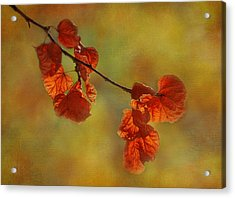 Sunshine And Red  Acrylic Print by Ivelina G