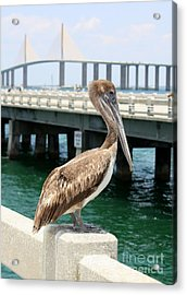Sunshine Skyway And Pelican Acrylic Print by Carol Groenen