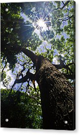 Sunshine Through The Trees Acrylic Print by Matt Radcliffe
