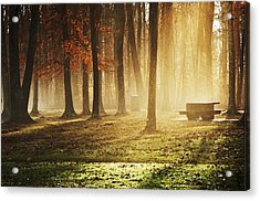 Sunshine Through The Woods Acrylic Print by Diana Boyd