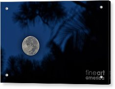 Supermoon August 2014  Acrylic Print by Lynda Dawson-Youngclaus
