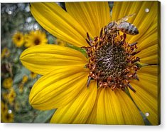 Supper Time Acrylic Print by Linda Unger