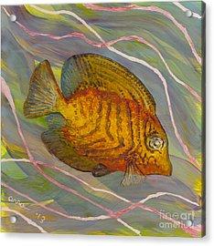 Surgeonfish Acrylic Print by Anna Skaradzinska
