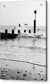 Surprised Seagulls Acrylic Print by Anne Gilbert