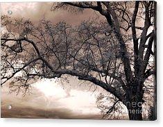 Surreal Fantasy Gothic South Carolina Oak Trees Acrylic Print by Kathy Fornal