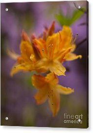 Surrealistic Blooms Acrylic Print by Mike Reid