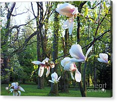 Suspended Acrylic Print by Judy Via-Wolff