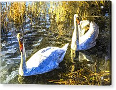 Swan Art Acrylic Print by David Pyatt