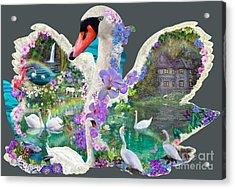 Swan Day Dream Acrylic Print by Alixandra Mullins