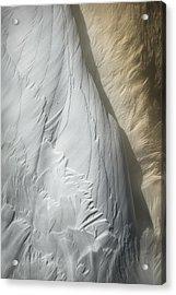Swan Detail Acrylic Print by Andy Astbury