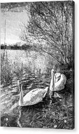 Swan Lake Art Acrylic Print by David Pyatt