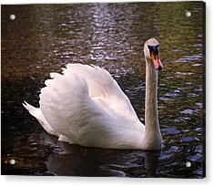 Swan Pose Acrylic Print by Rona Black