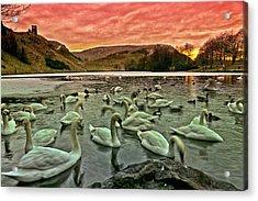 Swans In The Loch Acrylic Print by Jean-Noel Nicolas