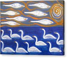 Swans Acrylic Print by Patrick J Murphy