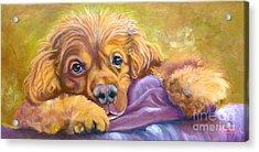 Sweet Boy Rescued Acrylic Print by Susan A Becker