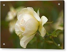 Sweet Home Rose Acrylic Print by Nick  Boren