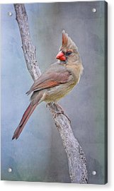 Sweet Little Lady Redbird Acrylic Print by Bonnie Barry