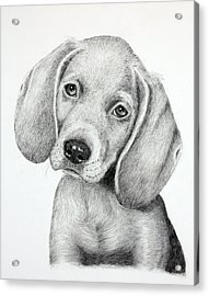 Sweet Puppy Love Acrylic Print by Lorraine Foster