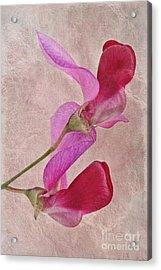 Sweet Textures 2 Acrylic Print by John Edwards