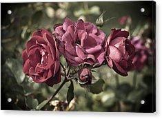 Sweetly Pink Acrylic Print by Christi Kraft
