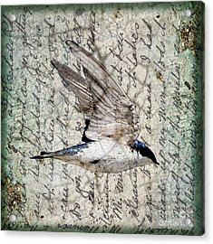 Swift Wings Acrylic Print by Judy Wood