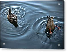 Swim And Take The Plunge Acrylic Print by Allan Millora