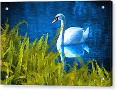 Swimming Swan And Ferns Acrylic Print by Kenny Francis