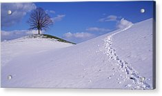Switzerland, View Of A Lone Linden Tree Acrylic Print by Panoramic Images