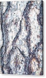 Sycamore Bark Abstract Acrylic Print by Tom Mc Nemar