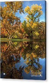 Sycamore Pool Reflections Acrylic Print by James Eddy