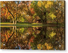 Sycamore Reflections Acrylic Print by James Eddy