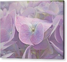 Symphony In Purple Acrylic Print by Kim Hojnacki