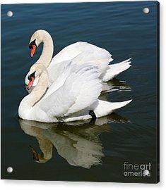 Synchronized Swans Acrylic Print by Carol Groenen
