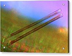 Synedra Diatoms Acrylic Print by Marek Mis