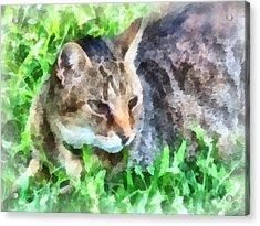 Tabby Cat Closeup Acrylic Print by Susan Savad