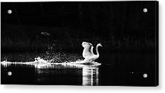 Take Off Acrylic Print by Rose-Maries Pictures