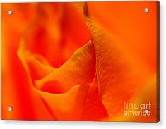 Tangerine Dreams Acrylic Print by Pamela Gail Torres