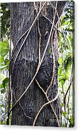 Tangled Vines Acrylic Print by Wendy Townrow